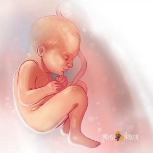 34-weeks-pregnant-Mama-Natural-pregnancy-week-by-week-300x300.jpg